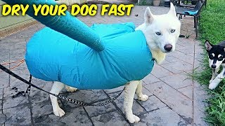 Fastest Way to Dry Your Dog!