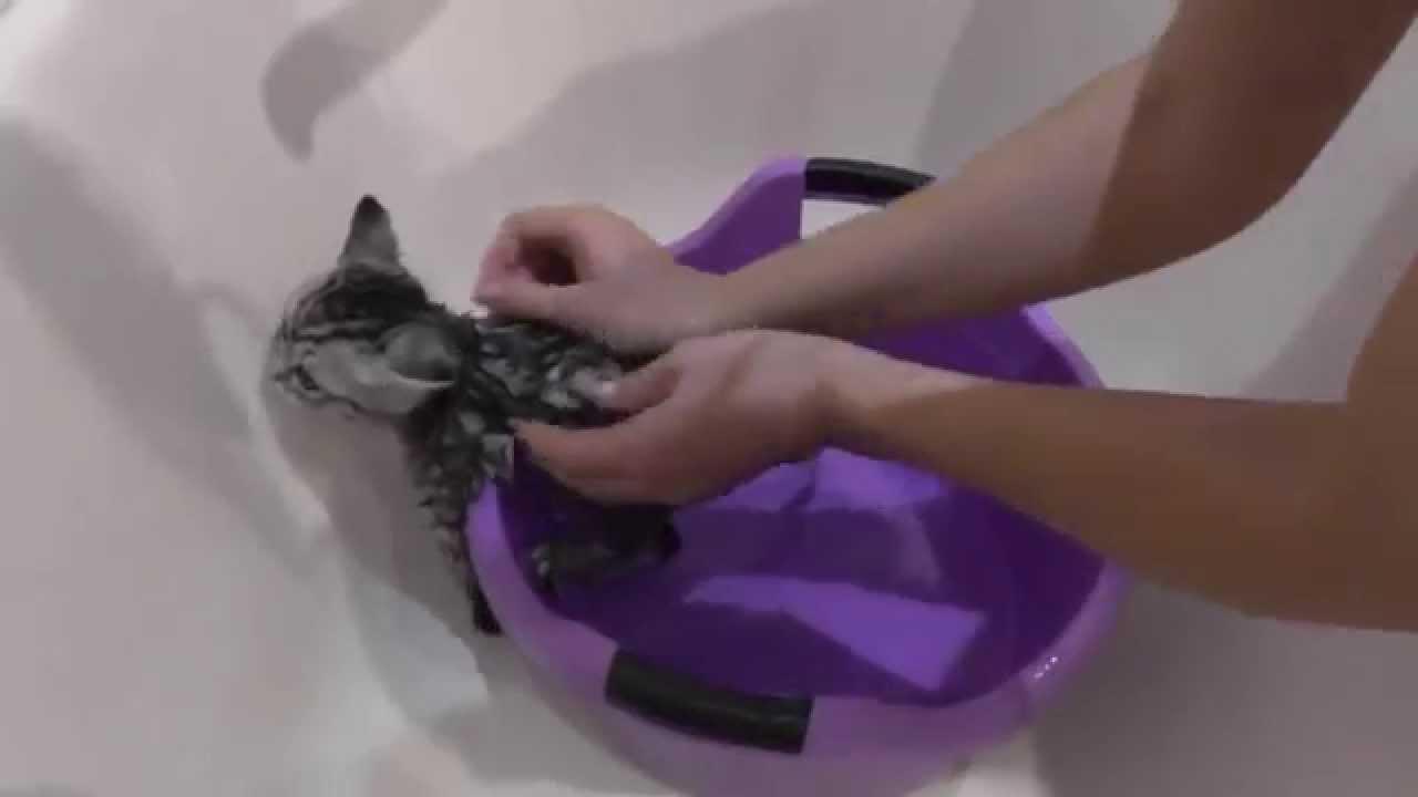 Как помыть котенка - Bayan.Tv - Bayana dair. - Video Portal