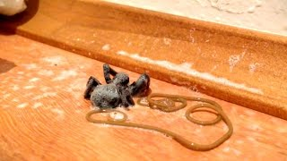 Bug Spray Kills Spider, Spawns Nightmare