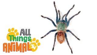 SPIDERS: Animals for children. Kids videos. Kindergarten | Preschool learning