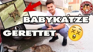 BABYKATZE VOR DEM TOD GERETTET !! | daily VLOG TBATB