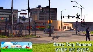 Stray dog rescue - step by step.