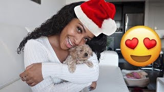 MEET MY NEW PUPPY!!! (ALL ABOUT MY BABY😍) VLOGMAS DAY 2