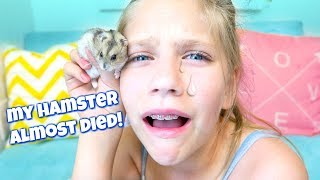 My Hamster Almost DIED! Shopping for Hamsters Bigger Cage at PetSmart