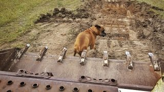 Veterinarian Squishes Dog With Bulldozer
