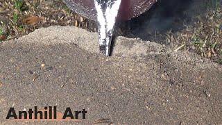 Casting a Bigger Fire Ant Colony with Molten Aluminum (Cast #057)