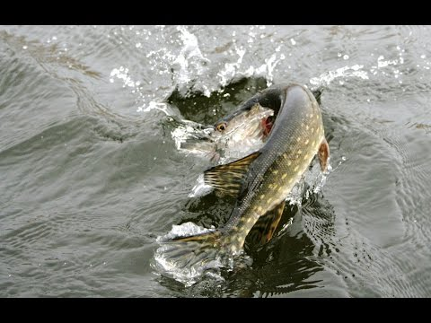 Большой улов на рыбалке или как поймать много рыбы