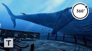 the Blu: Whale Encounter | 3D 360 VR