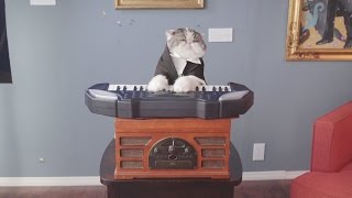 Classical Choir Cats - Aaron