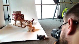 Dog Modeling is Hard Work || ViralHog