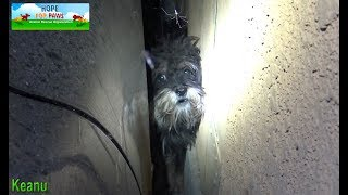 Scared abandoned dog hides in a spot that we couldn
