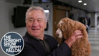 Robert De Niro Has Never Seen a Dog