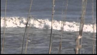 Climate change on the North Carolina coast.