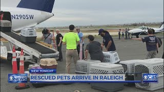 Pets abandoned in Puerto Rico now looking for homes in Raleigh