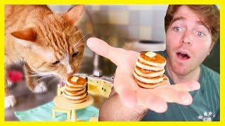 MAKING TINY FOOD FOR MY CAT!