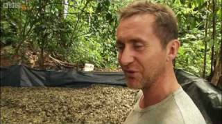 Bruce Parry sees how cocaine is made in the Amazon - Explore - BBC