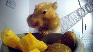 Inside a hamster