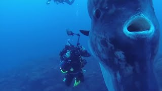 5 Deep Sea Creatures Faced By Divers!