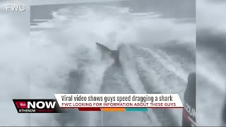 FWC investigating after social media video of shark being dragged