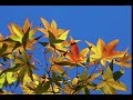 autumn leaves 3662947  340mp3