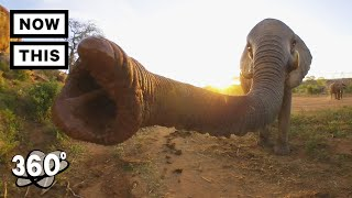 Visit a Baby Elephant Orphanage in Kenya | Unframed by Gear 360 | NowThis