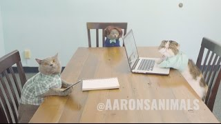 Cats in the Workplace - Aaron