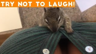 TOP 100 FUNNY ANIMALS of 2018   Try Not To Laugh Challenge March / April   Funniest Pet Videos