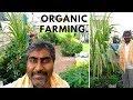 How to start your organic terrace garden...mp3