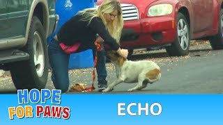 A dog with a broken leg ran 30 blocks in extreme pain until...