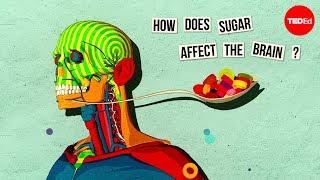 How sugar affects the brain - Nicole Avena