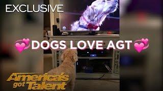 Dogs React To Singing Dog - America