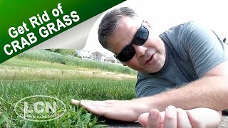 How To Get Rid of Crab Grass In The Lawn