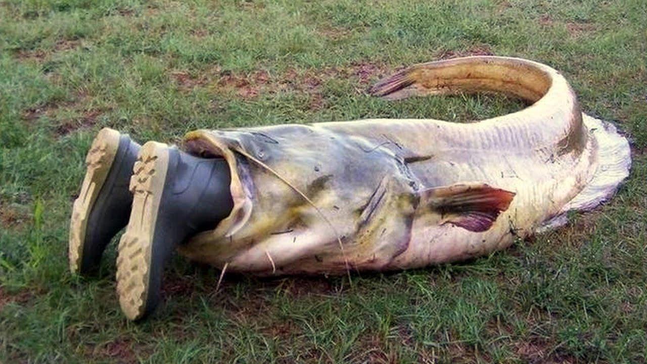 Фото прікол после рибалкі 11 фотография