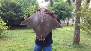 Cooking a 40 Pound Stingray - How to Cook a Big Stingray - My Village My Food