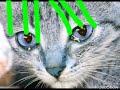 Meme - cat opa gannam stayl. My animatio...mp3