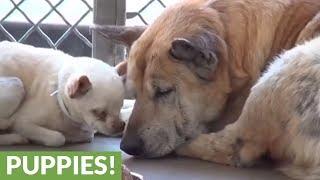 Elderly dogs abandoned at shelter find new home together
