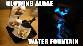 Glowing Algae Water Fountain