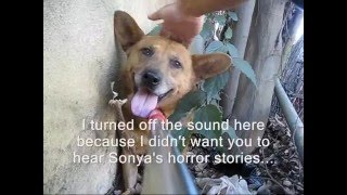 Dog rescue: Dustin, the abandoned dog. (By Eldad Hagar)
