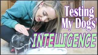 Testing My Dogs