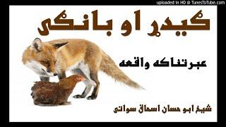 sheikh abu hassaan swati pashto bayan - e ګیدړ او بانګی