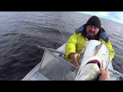 охота рыбалка на сетках
