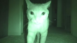 What Cats Do At Night...