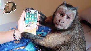 Monkey unboxing iPhone 8