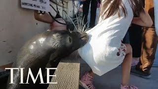 A Sea Lion Grabbed A Young Girl Off A Dock In Canada | TIME