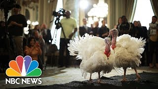 President Donald Trump Leads Turkey Pardoning At White House | NBC News