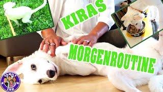 KIRAS MORGENROUTINE | WELPE LABRADORS LEBEN BEI FAMILY FUN