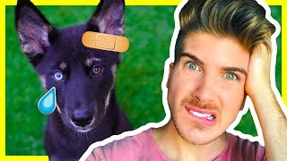 joey graceffa puppy