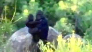 Top 15 Most Convincing Bigfoot Sightings Caught on Tape