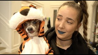 My Dogs Try On Halloween Costumes 2