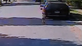 Watch a Bus Driver Rescue a Toddler Standing in a Busy Road